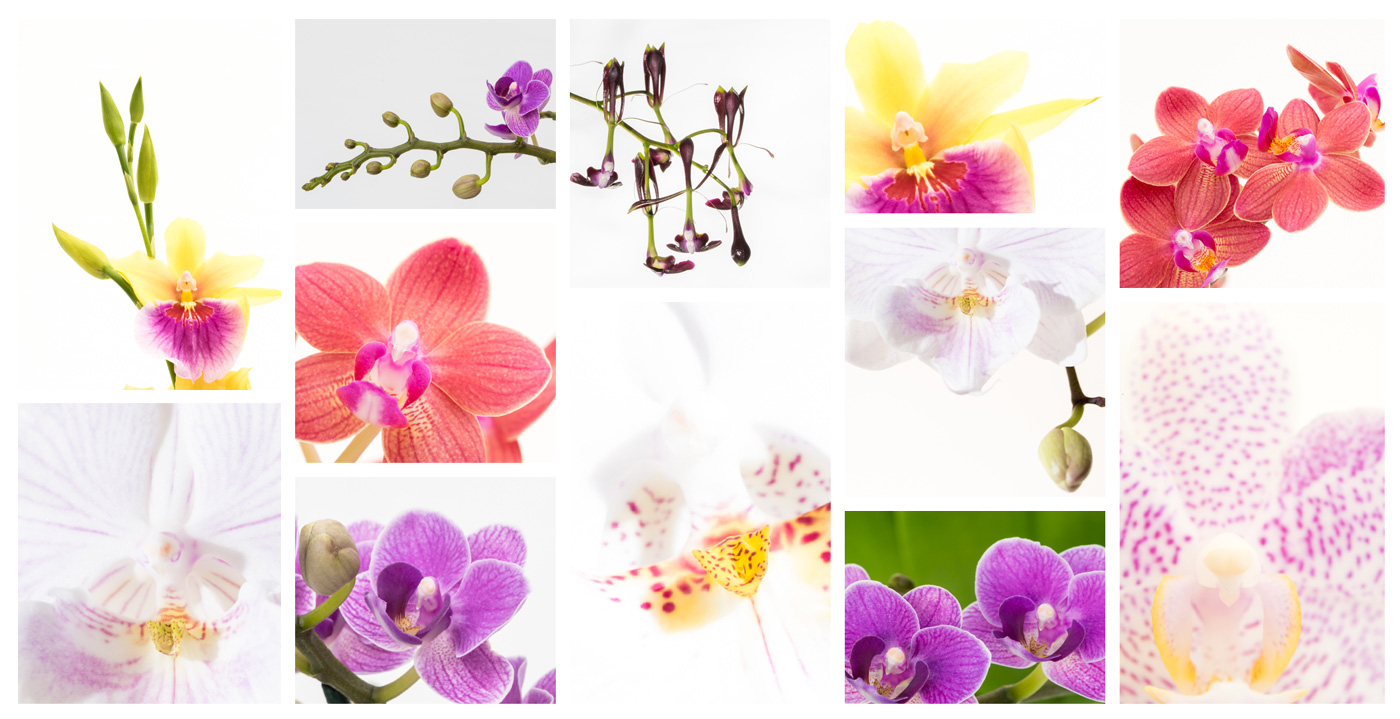 collage orchideen