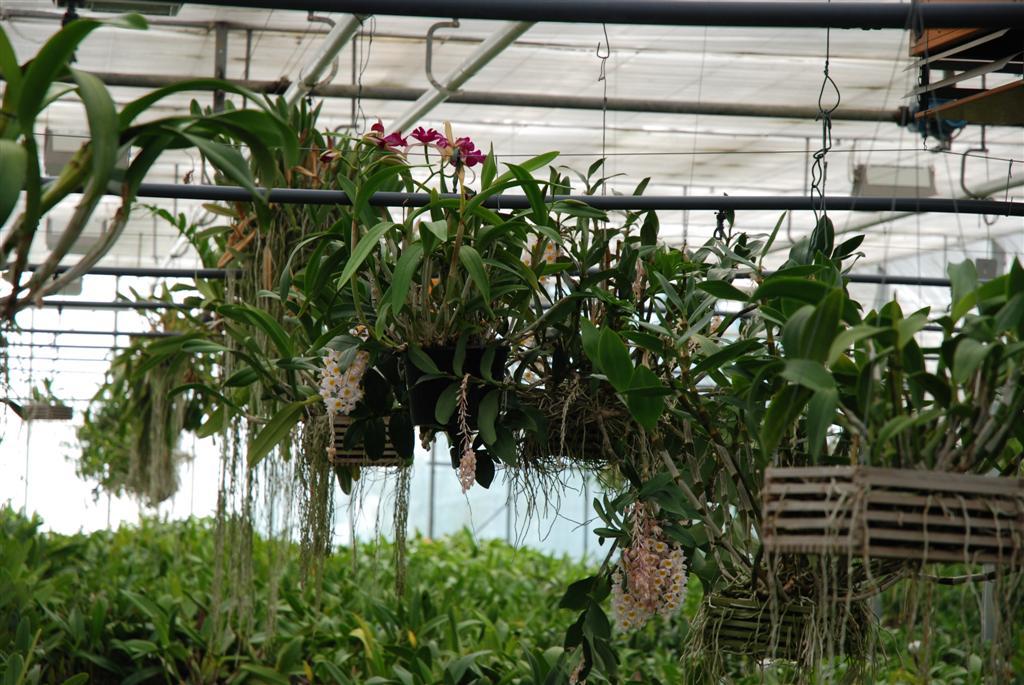 bilder unserer erlebnisg rtnerei currlin orchideen. Black Bedroom Furniture Sets. Home Design Ideas