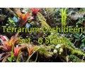 terrarium-orchideen-set 6x currlin orchideen